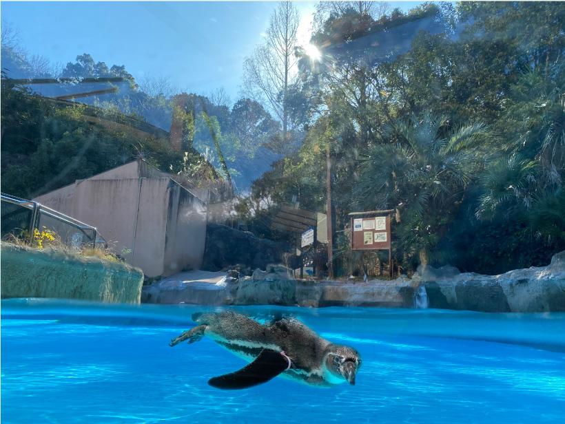 こども動物園:イメージ