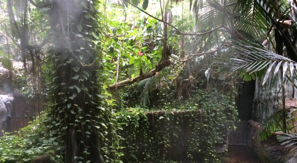 ジャングルミュージアム